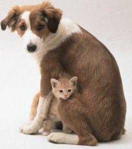 Protectora de animales