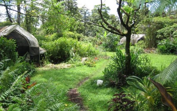 permacultura bosque