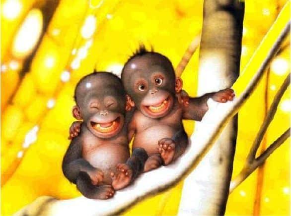 sonrisa animales