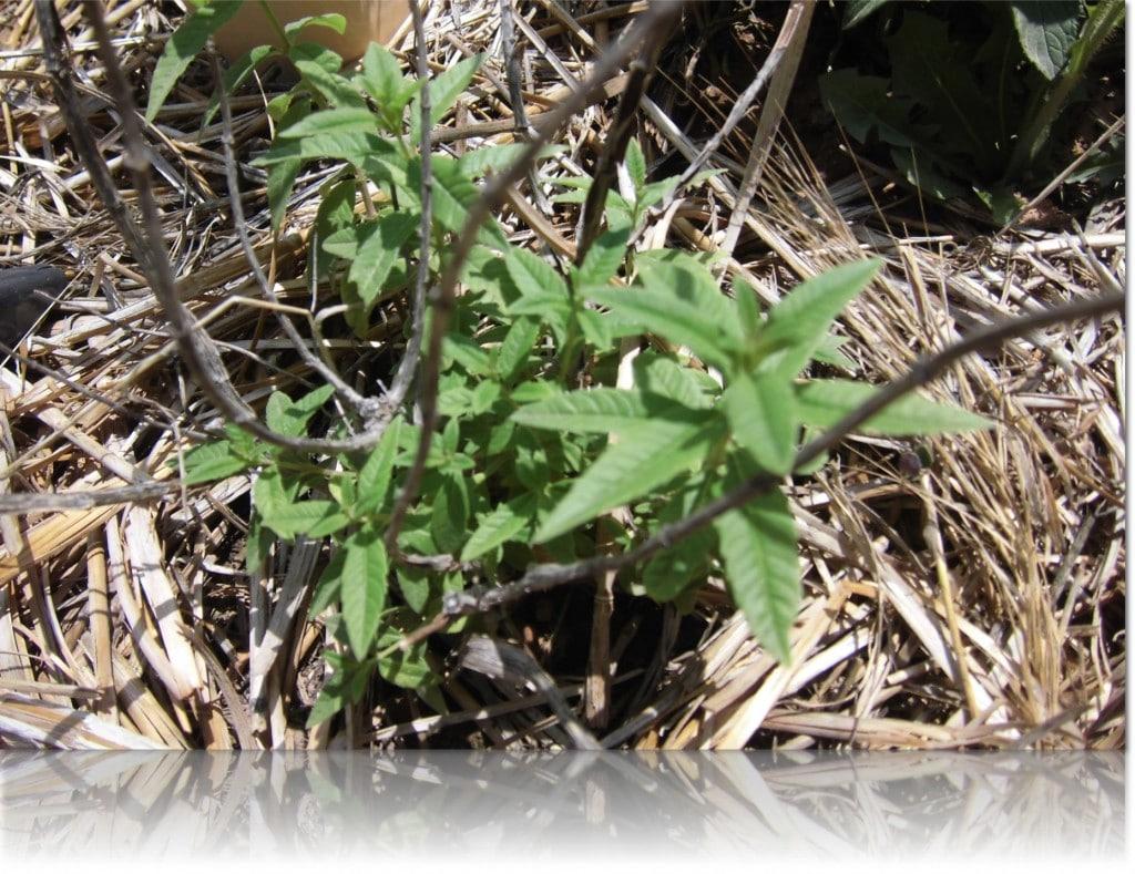 Huerto ecol gico de bio victor parte 1 las plantas - Huerto de plantas aromaticas ...