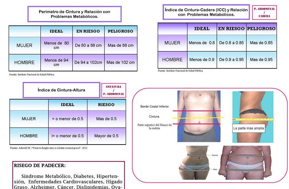 Perimetro cintura y cadera